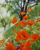 Poppies Madrid Sur, Spain 2006