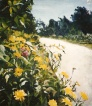Yellow Daisies in Golden Gate Park San Francisco. California 1999
