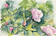 Autumn Pink Roses in the Retiro Rose Garden 2005