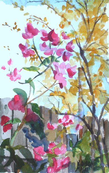 Bouganville and Pomegranet Tree 2011