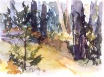 Cantalojas Forest 2007