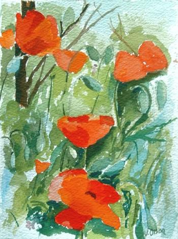 Poppies 2006