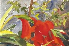 Red Flowers, San Diego 2009