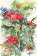 Red Roses 2005