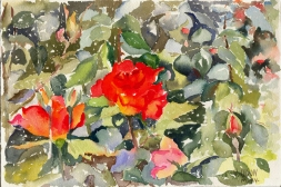 Red Roses 2006
