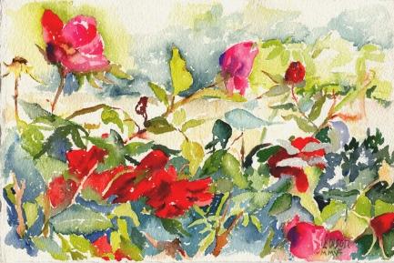 Roses 2005