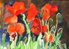 Spanish Poppies 1999
