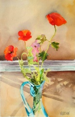 Spanish Poppies in front of Window 2016