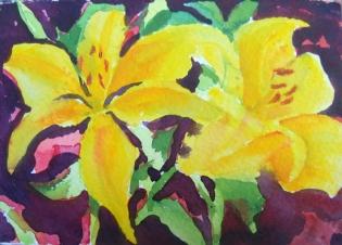 Daylilies