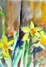 Narcissus 1999