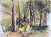Parque Sur Forest 2006